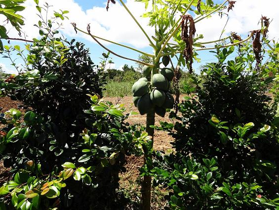 この地域では野菜、果物の自家栽培は当たり前