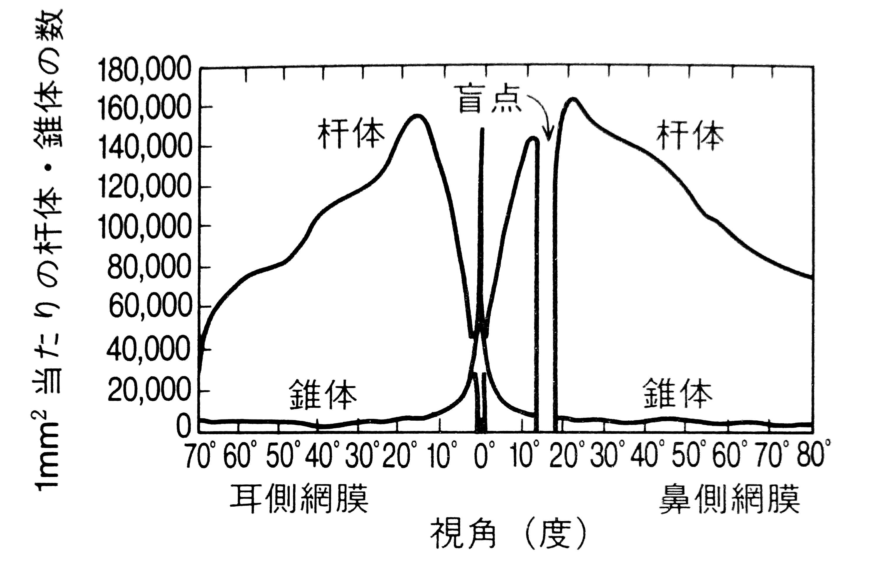 図1.左眼の網膜位置に対応した桿体・錐体の分布密度(感覚知覚ハンドブック p.924 図18・5・1)